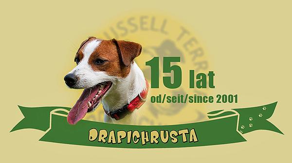 zlot drapichrust Hodowla Jack Russell Terrier Z Todrykowa, Poznań, Toruń, Brodnica, ZKwP